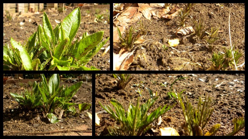 horseradish april