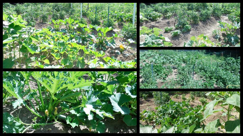 071214 garden