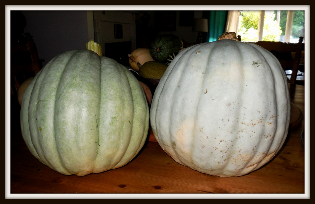 082414 compost pumpkins
