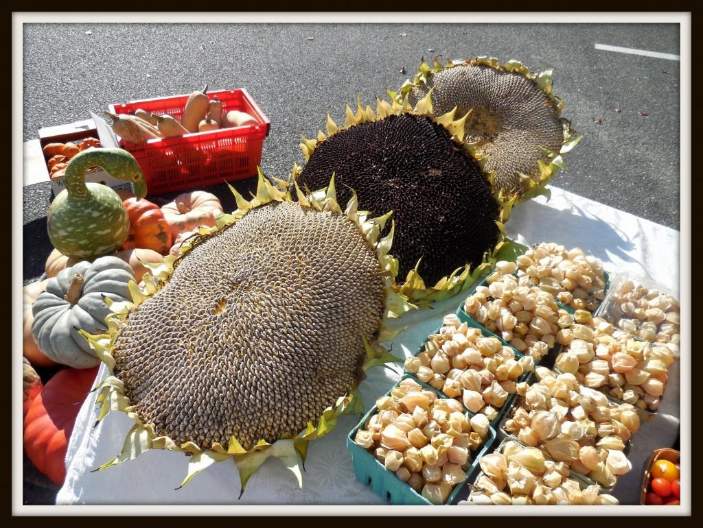 100514 sunflowers